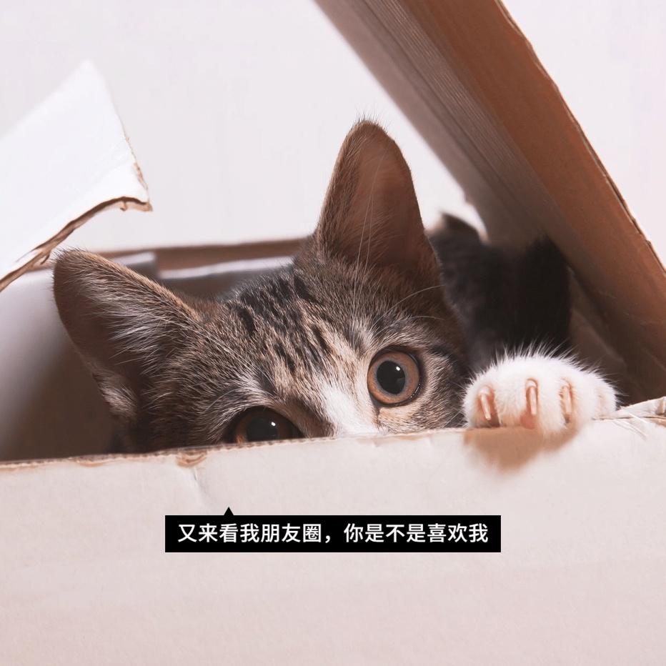 萌宠猫咪可爱朋友圈封面