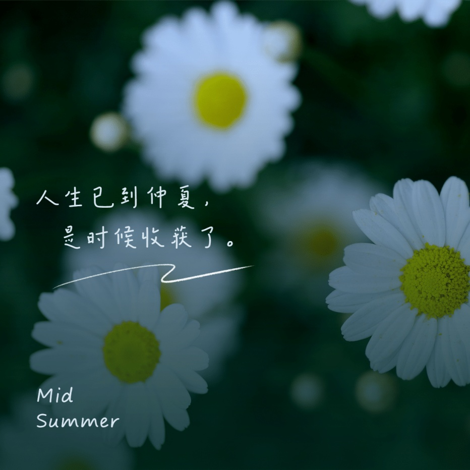 深色模式仲夏鲜花问候朋友圈封面
