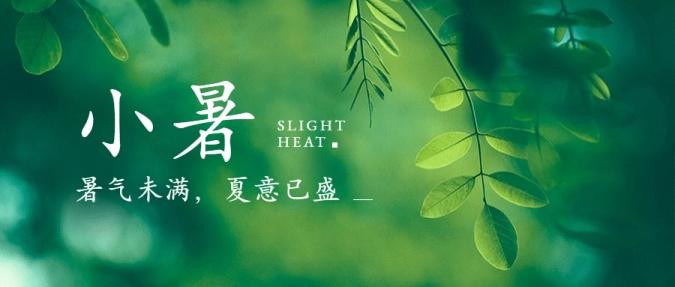 小暑节气夏天绿植实景公众号首图