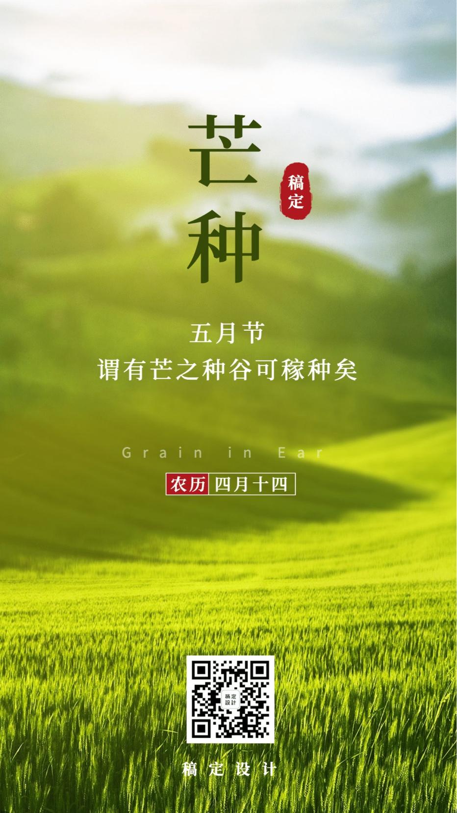 芒种节气稻田清新实景手机海报