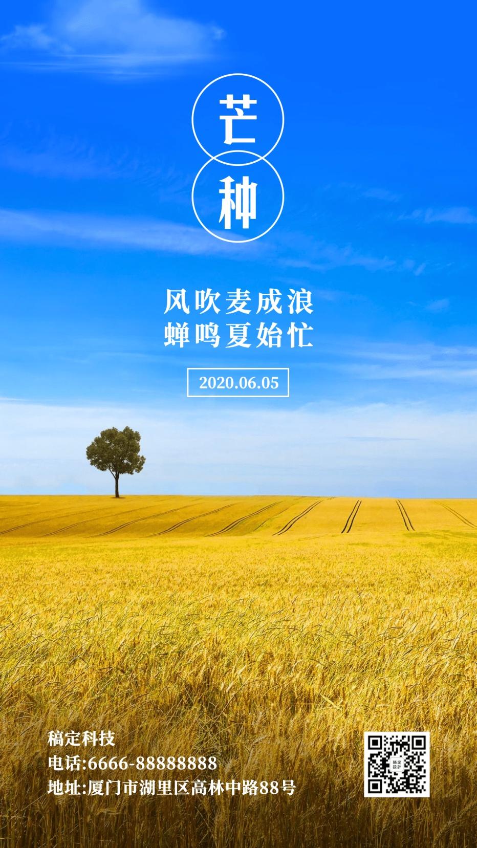 芒种节气稻田阳光清新实景手机海报