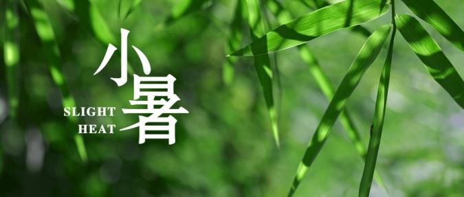 小暑节气清新植物实景公众号首图