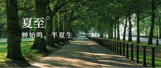 夏至节气绿荫夏日清爽公众号首图