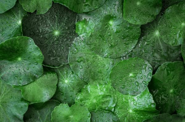植物高清图片分享 植物图像精选合集