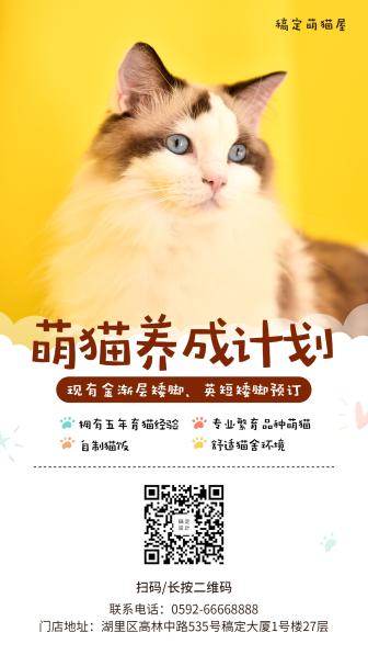 宠物/实景卡通/项目介绍/手机海报