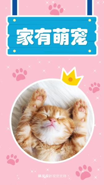 晒宠物海报模板设计