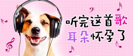 音乐萌宠宠物恶搞趣味可爱实景公众号首图