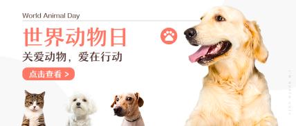 世界动物日萌宠宠物实景排版公众号首图