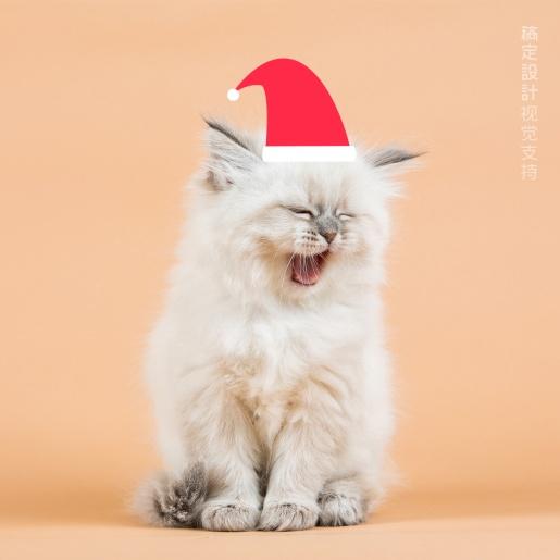 圣诞头像 可爱宠物简单卡通圣诞帽