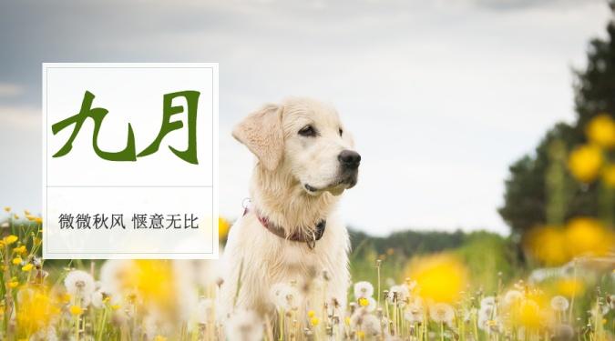 九月月初问候狗狗横版海报