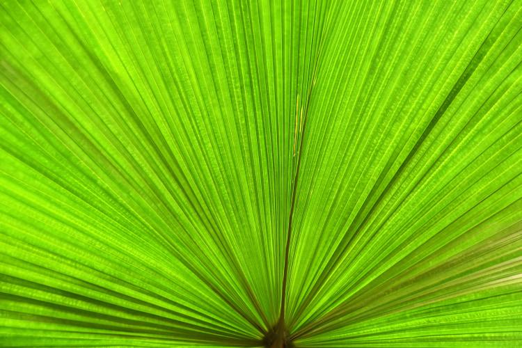 为什么绿色背景好抠图?抠图为什么都用绿色背景?
