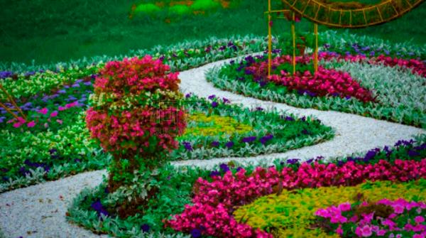 分享一些高清的大型植物图片素材