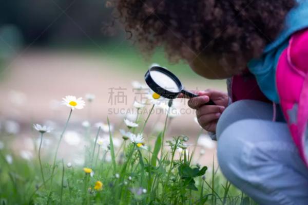 哪里有动植物图片素材?有关多肉植物图片分享