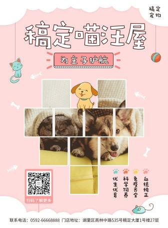 宠物/可爱/项目介绍/张贴海报