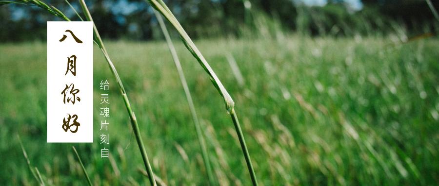 八月你好问候植物小清新实景公众号首图