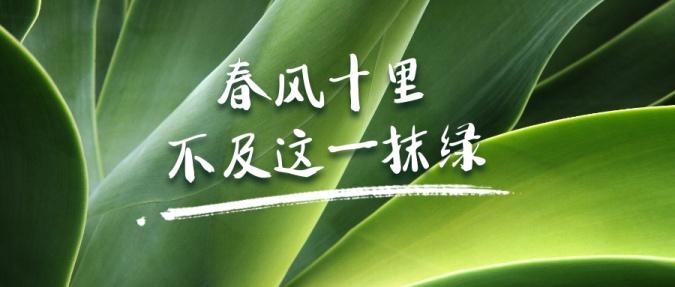 春天绿植物实景简约公众号首图