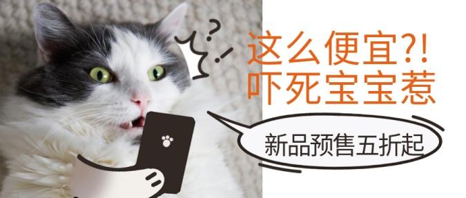 双十二双12萌宠宠物店新品可爱猫主图公众号首图